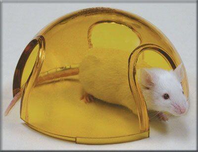 小鼠透明冰屋